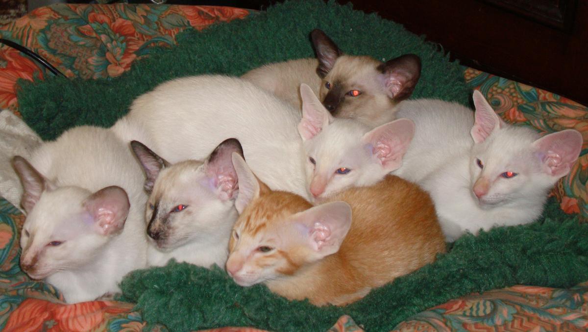 gattini di 10 settimane...che stanno aspettando? forse la mamma...picciù (ossia bacetti) dans a-mici 10.11.2009_kittens